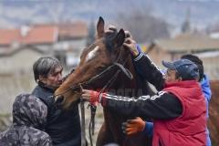 todorovden-kushii-aprilovo- 31