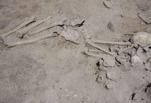 skelet-v-slatina