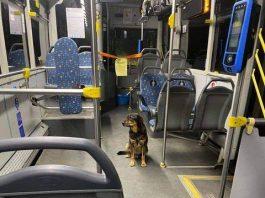 избягало-куче