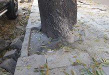 бетонирани-дървета